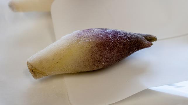 冷凍ミョウガ